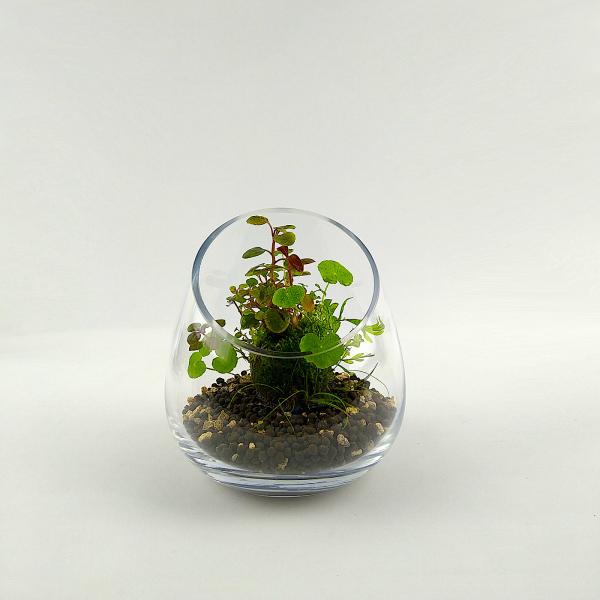 "PlantMyTank - Wabi Kusa Set mit bepflanzem Moosball - ""Trulla"""