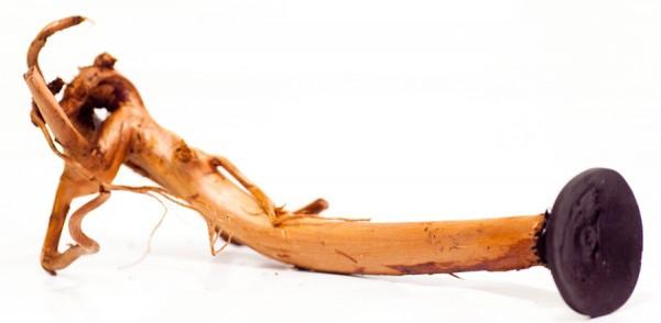 Garnelenast - mit Saugnapf