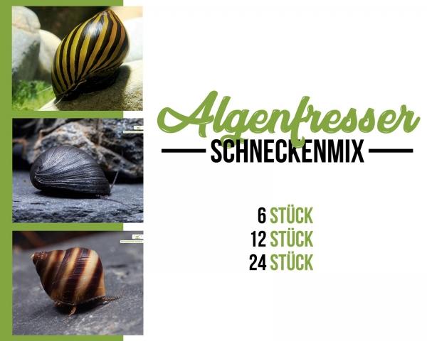 Schnecken mix - Algenfresser