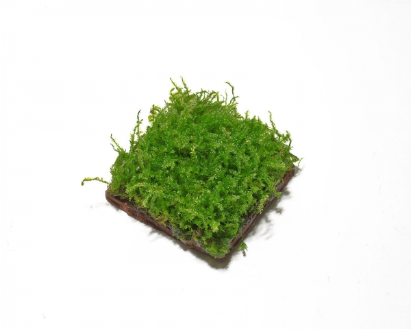 Moospad auf Terakotta - 5x5 cm