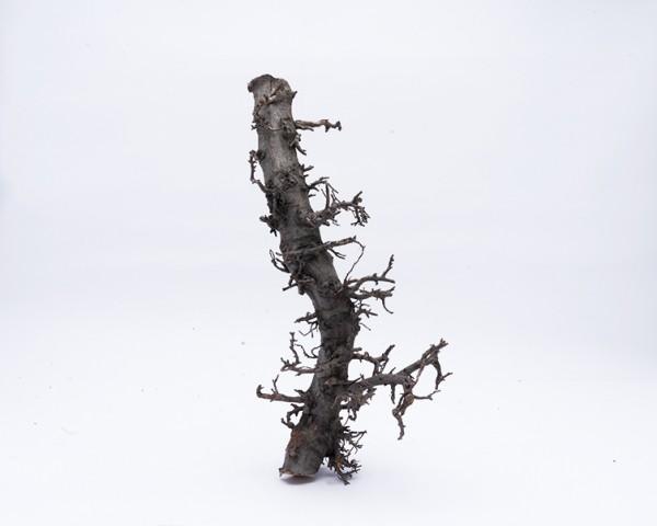 Aquascape Bonsai Stamm - 30- 40cm