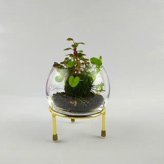 Wabi Kusa Set mit bepflanzem Moosball -
