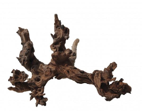Amtra - Mystic Wood