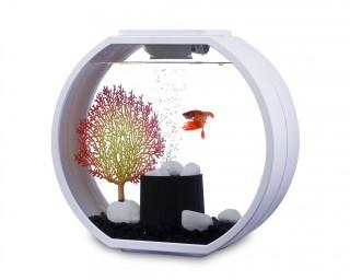 Deco O mini Designer Aquarium AA10L-OGD Komplettset - 10L - weiss