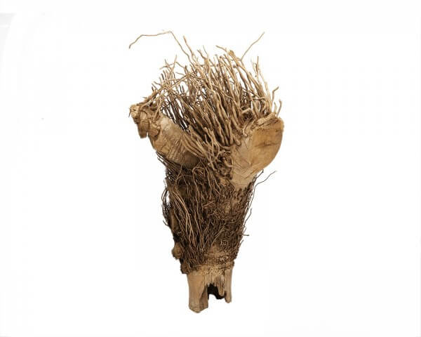 Bambuswurzel natur - ca. 40 cm