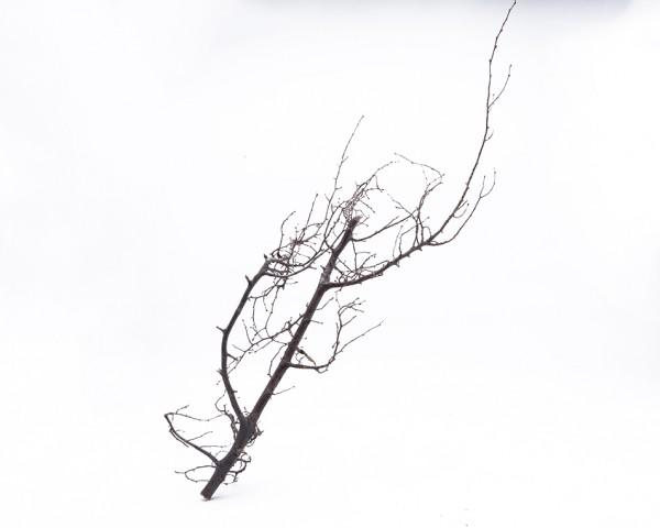 Aquascape Bonsai Ast 40-70cm