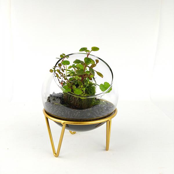"Wabi Kusa Set mit bepflanzen Moosball - ""Goldenes Leben"""
