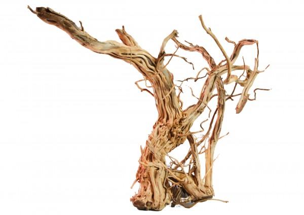 Amtra - Holz Dragon Skin