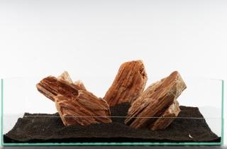 Versteinertes Holz - vers. Größen
