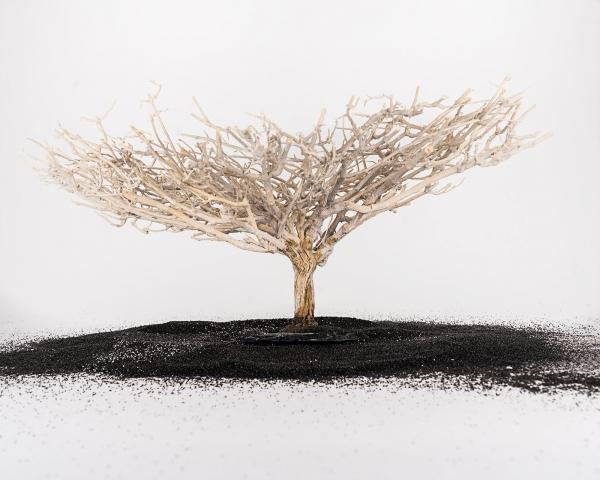Crusta Baum auf Schiefer - Größe M