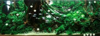 Green Jungle by Josh Sim