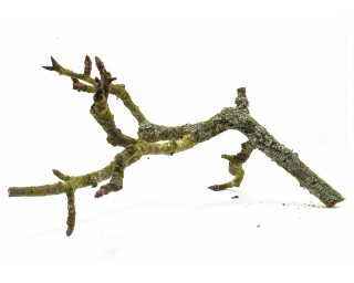 Birnen Hardscape Ast - ca. 30cm - Lecker & Dekorativ